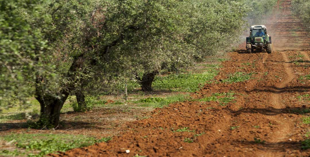 olive-farm-tractor