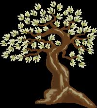 Olive-tree