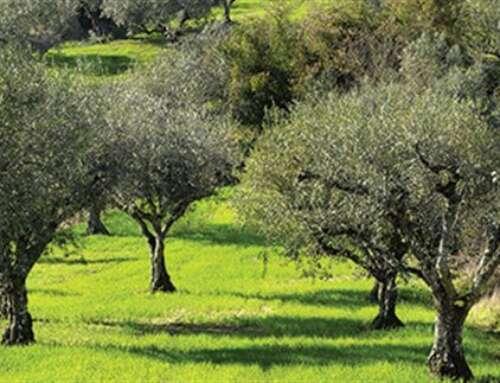 Εντατικούς ελέγχους ζητά η Κομισιόν για την Xylella | Agronews.gr