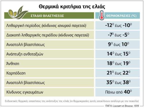 Θερμικά κριτήρια της ελιάς