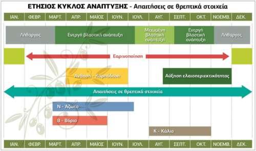 Ετήσιος κύκλος ανάπτυξης της ελιάς